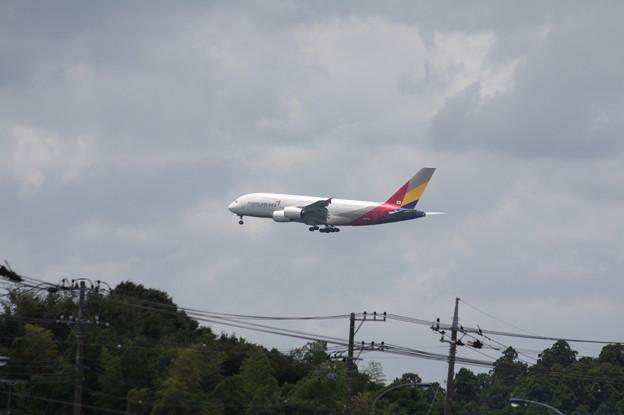 アシアナ航空 A380-800 (1)