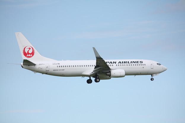 日本航空 JAL B737-800 JA317J (2)