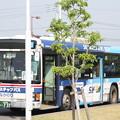 茨城交通 水戸230あ737 「スカイマーク」ラッピング 笠間ひまつりシャトルバス