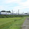 黄金の稲を行く常磐線E531系 (3)