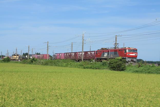 黄金の稲を行くEH500-33牽引2094レコンテナ貨物列車 (6)