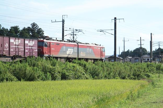 黄金の稲を行くEH500-33牽引2094レコンテナ貨物列車 (8)