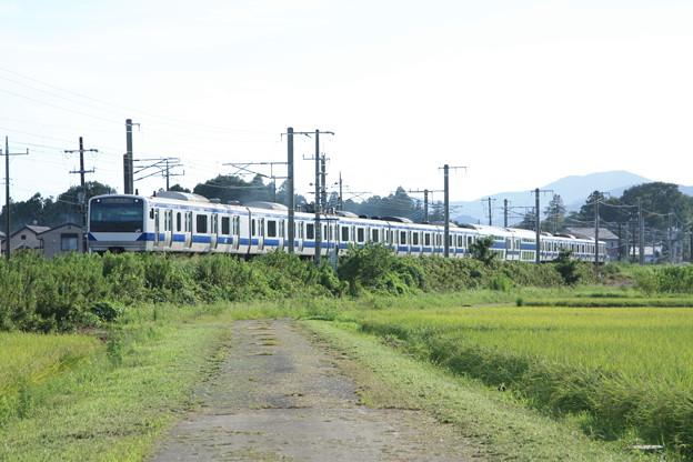 黄金の稲を行く常磐線E531系 (5)