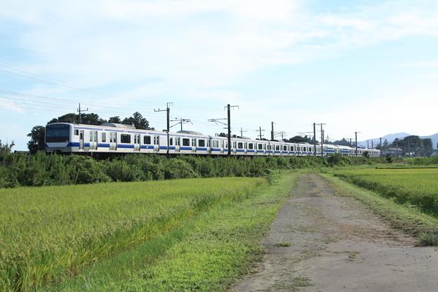 黄金の稲を行く常磐線E531系 (6)