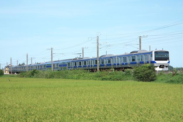黄金の稲を行く常磐線E531系 (7)
