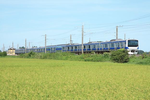 黄金の稲を行く常磐線E531系 (8)