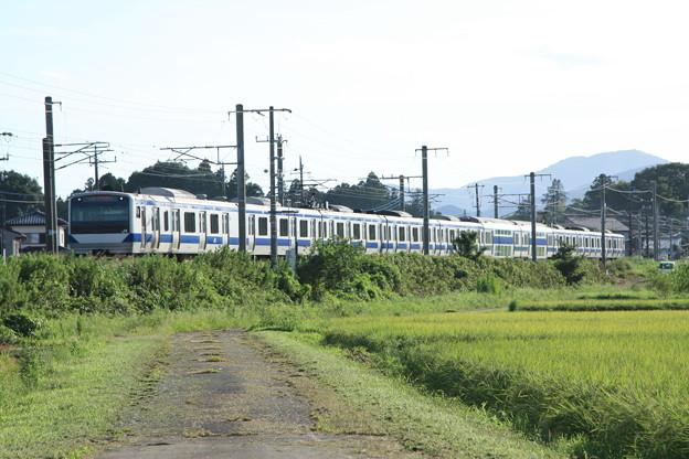 黄金の稲を行く常磐線E531系 (9)