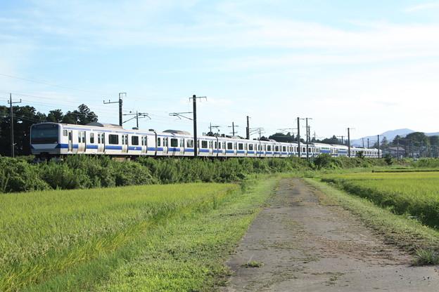 黄金の稲を行く常磐線E531系 (10)