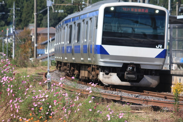 コスモスとE531系3000番台K555編成 (4)