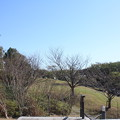 Photos: 葛西臨海公園 20181021_06