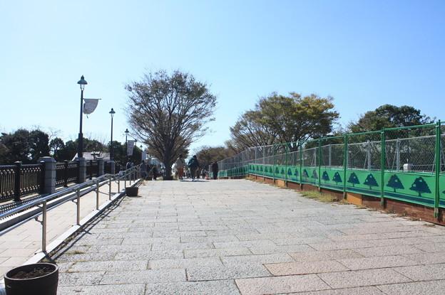 Photos: 葛西臨海公園 20181021_09