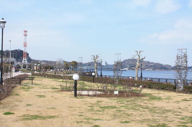 横須賀ヴェルニー公園 散策 20190302_88