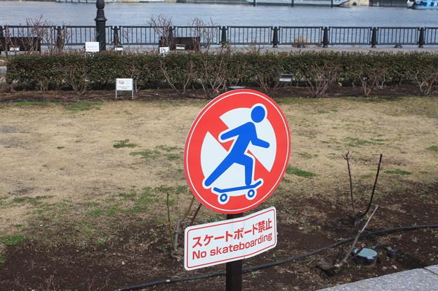 横須賀ヴェルニー公園 散策 20190302_89