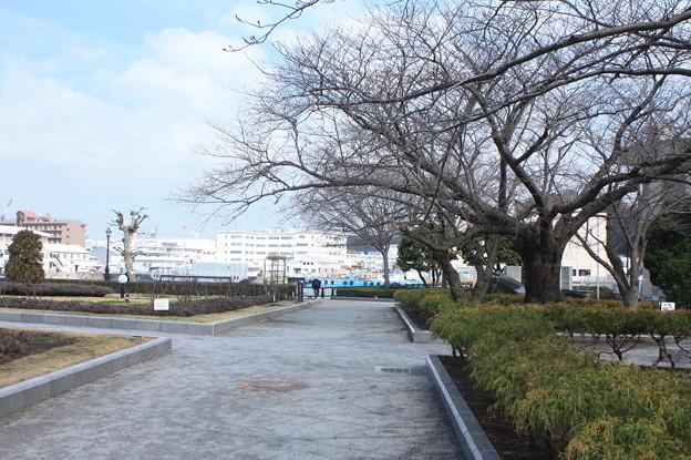 横須賀ヴェルニー公園 散策 20190302_94