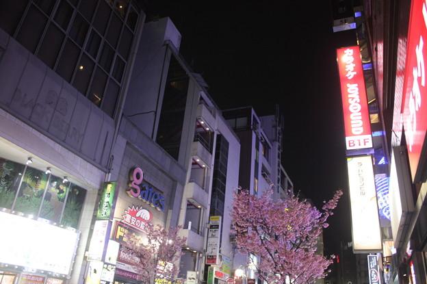 福岡 20190323_74
