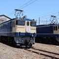 Photos: EF65 1102・EF65 2101 「さくら」ヘッドマーク