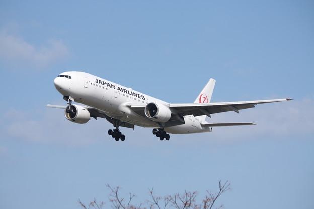 日本航空 JAL B777-200 JA8979 (4)