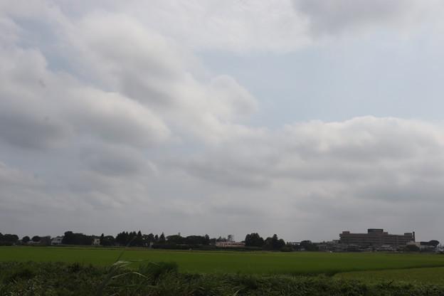 夏の風景 20190811_11