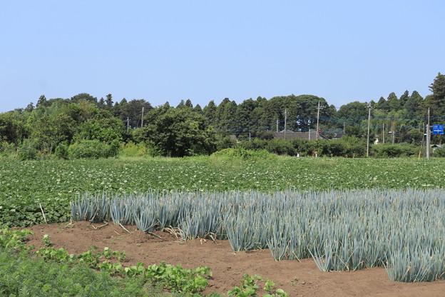 夏の風景 畑 20190818_02
