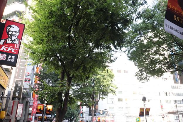 渋谷 20190817_23