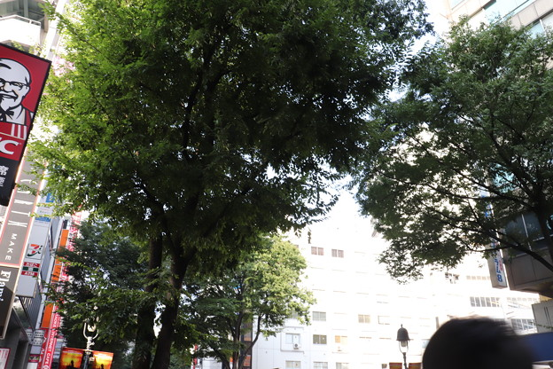 渋谷 20190817_24