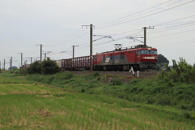 秋の田園風景を行くEH500-42牽引2094レ 2019.09.28 (11)