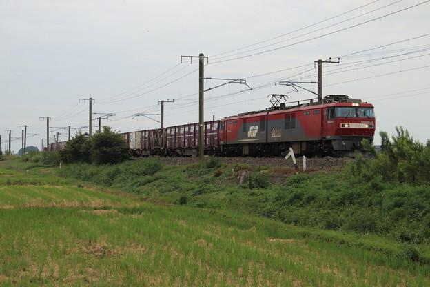 秋の田園風景を行くEH500-42牽引2094レ 2019.09.28 (12)