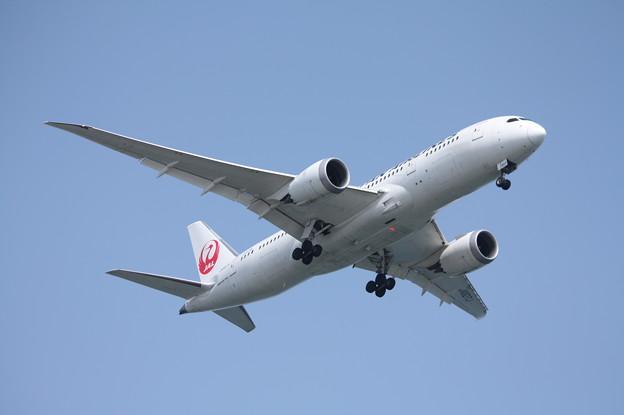 日本航空 JAL B787-8 JA827J (2)