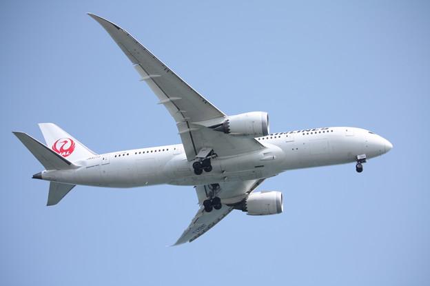 日本航空 JAL B787-8 JA827J (3)