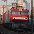Photos: 常磐線 2094レ EH500-10牽引 2019.11.09 (12)