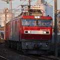 Photos: 常磐線 2094レ EH500-10牽引 2019.11.09 (13)