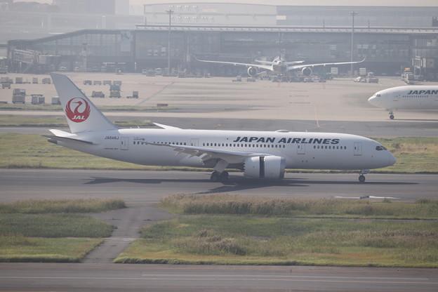 日本航空 JAL B787-8 JA846J (1)
