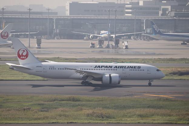 日本航空 JAL B787-8 JA846J (2)