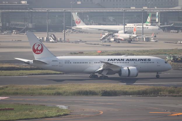 日本航空 JAL B787-8 JA846J (4)