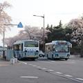 桜満開で県庁バスターミナルに到着する関東鉄道バス