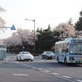 桜満開で県庁バスターミナルに到着する関東鉄道バス (1)