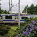 Photos: 紫陽花&E531系 2020.07.11 (3)