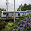 Photos: 紫陽花&E531系 2020.07.11 (5)