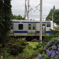 Photos: 紫陽花&E531系 2020.07.11 (6)
