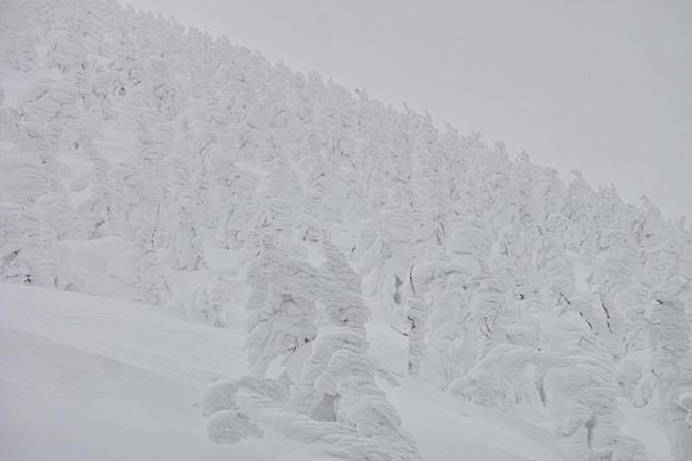 06.悪天候下の樹氷たち