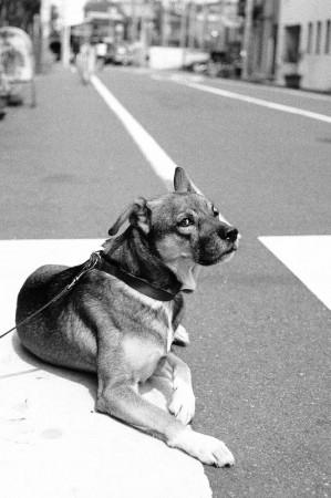 モノクロなちょび様(Kodak Tri-X 400)