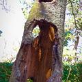 風通しの良い樹