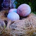 Photos: 卵のような