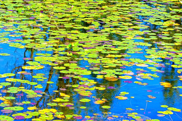 花のない池