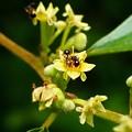 アリを呼ぶ花