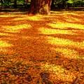 散り敷く黄葉