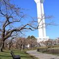 桜開花目前の五稜郭公園で