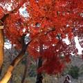 Photos: 月の石もみじ公園