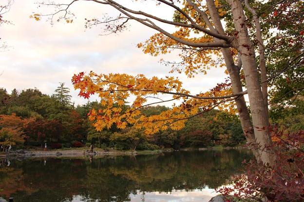 日本庭園part2