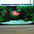 2009年度 第27回日本観賞魚フェア 水槽ディスプレイコンテスト 90cm水槽の部 準優勝